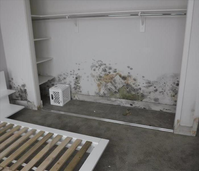 Mold Remediation in Mar Vista, CA Before