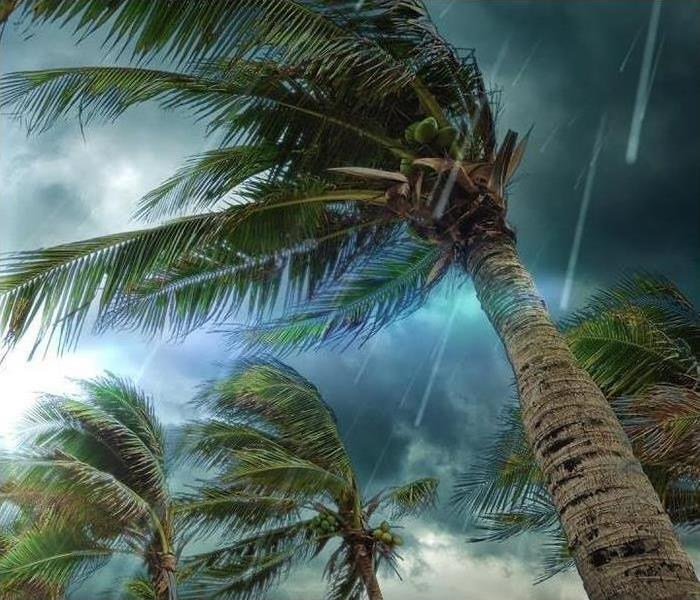 Palm trees in a rain storm